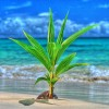 Seedling on the beach