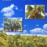 Coconut Cultivators Guide