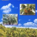Coconut Cultivators Guide