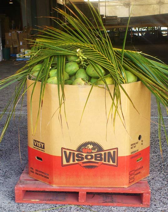 Drinking coconut pallet order