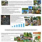 A Bright Future for Coconut in Northern Australia